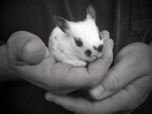 kit in Daddy's hands
