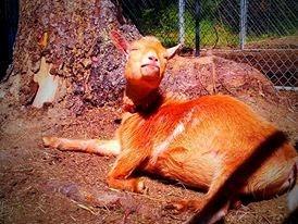 sun bathing ruby